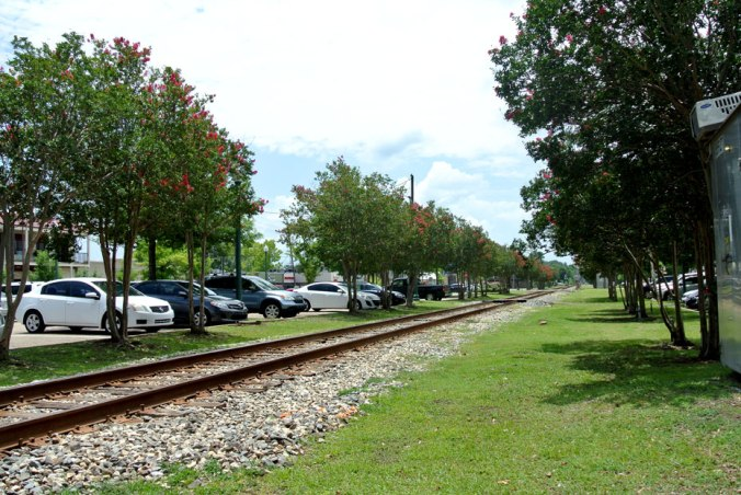 Train tracks lined with crape myrtles.